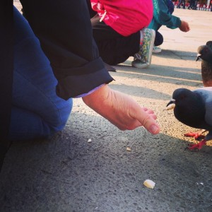 blog photo-feeding pigeons